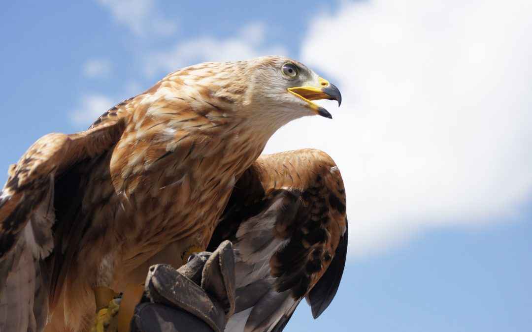 Six Lessons from an Eagle