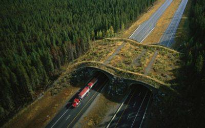 Terror on the Highway