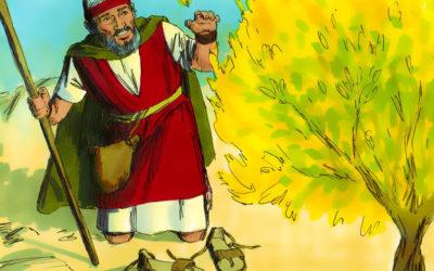 12 मूसा –  नम्र विश्वास